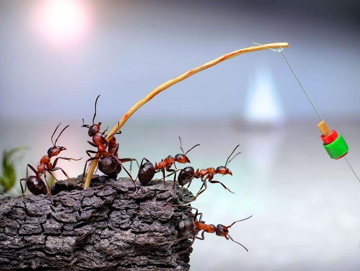 Ants fishing