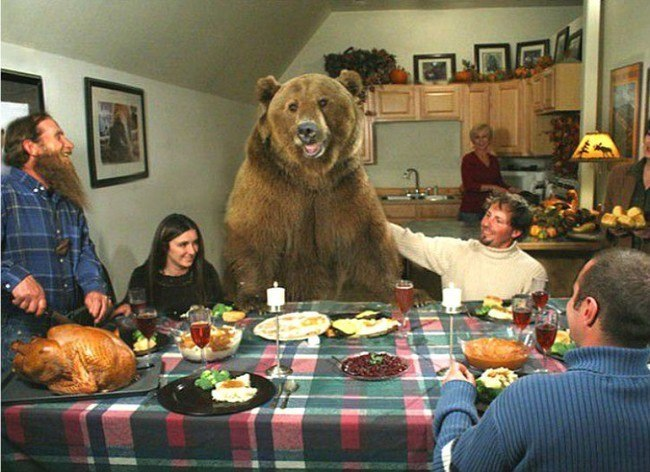 Brutus the Bear was raised from the time he was a cub by Naturalist Casey Anderson.