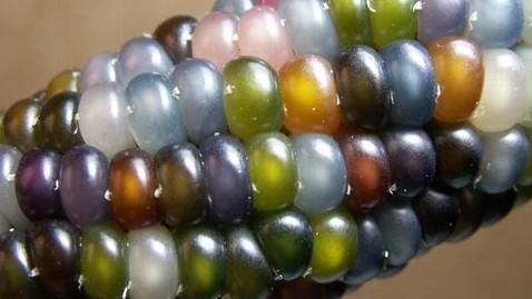 rainbow colored glass gem corn