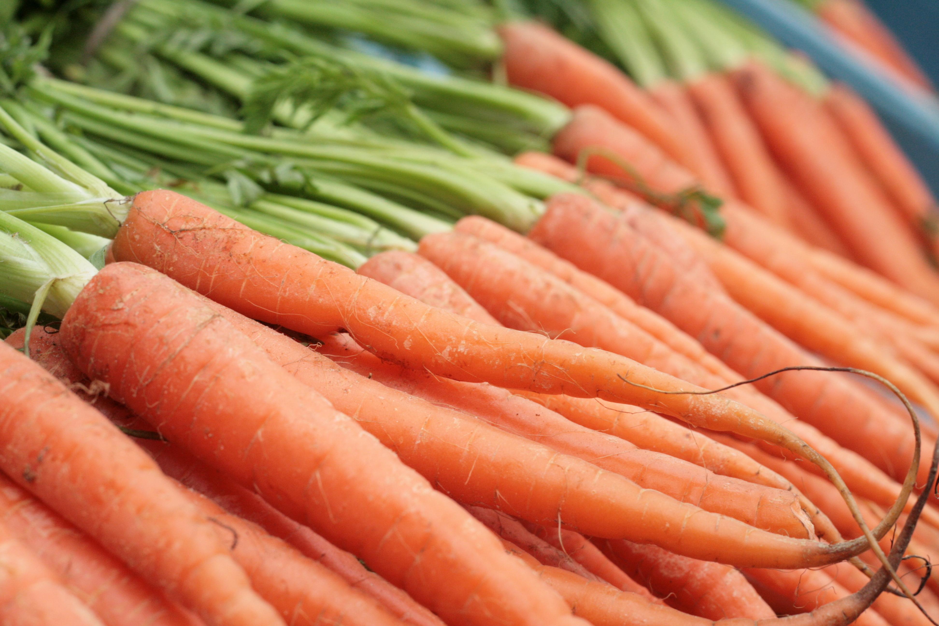 Carrots negative calorie food