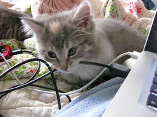 apple cider vinegar stop cat from biting cords