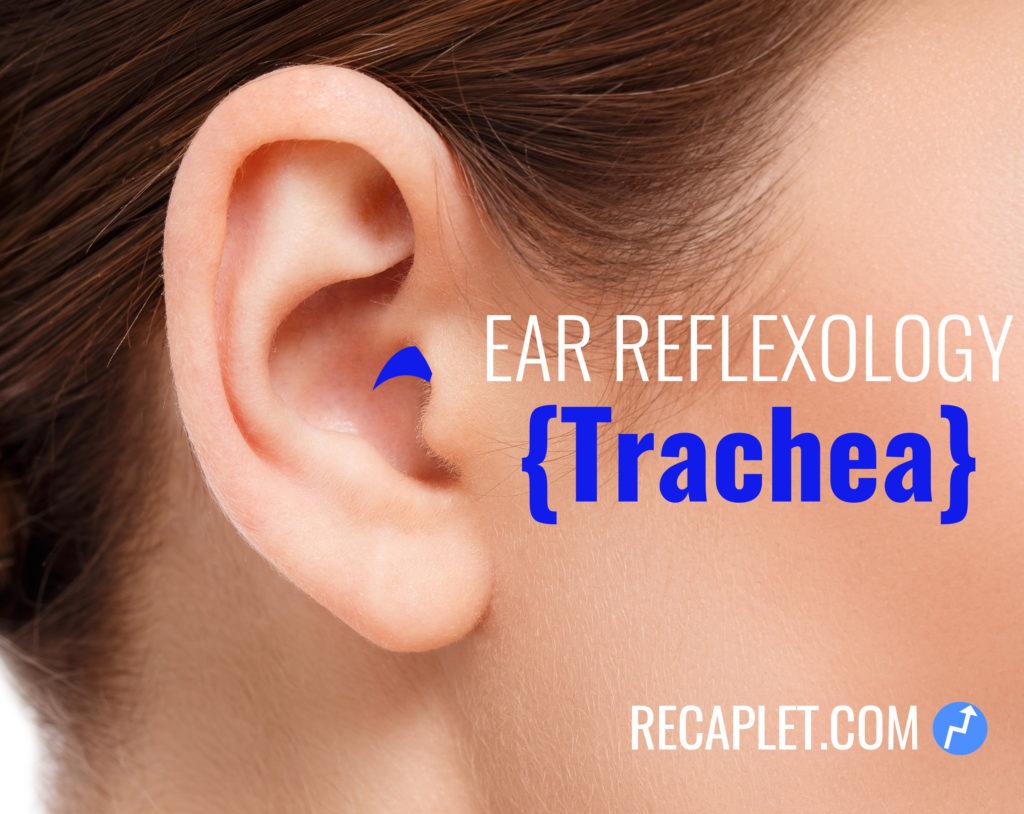 Trachea Reflexology