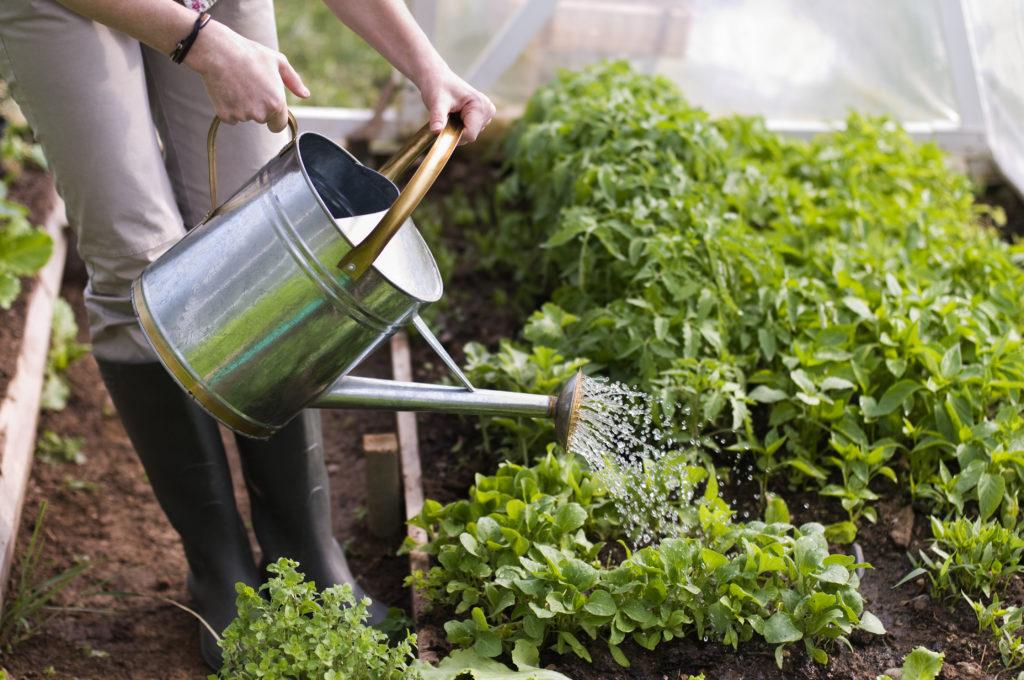 Fertilize Plants with Apple Cider Vinegar